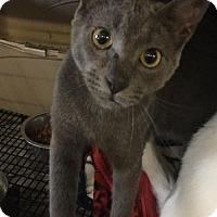 Adopt A Pet :: Shadow - Del Rio, TX