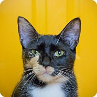 Adopt A Pet :: Alexandria - Los Angeles, CA