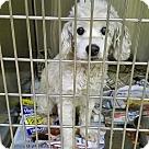 Adopt A Pet :: Carlos