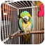 Photo 3 - Macaw for adoption in Vancouver, Washington - ROBERT