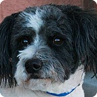 Adopt A Pet :: Buster - Palmdale, CA