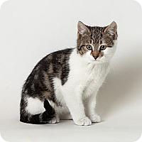 Adopt A Pet :: Eggnog - Rockaway, NJ