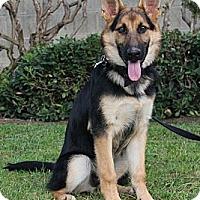 Adopt A Pet :: MacKenzie - Laguna Niguel, CA
