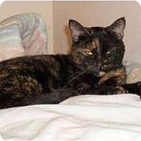 Adopt A Pet :: Momma - Springdale, AR