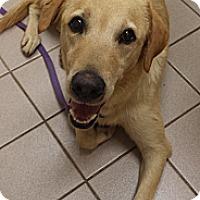 Adopt A Pet :: Gunner - Knoxville, TN
