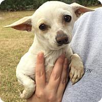 Adopt A Pet :: Tita - geneva, FL