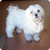 Adopt A Pet :: Kismet - Cotati, CA