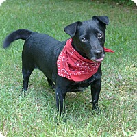Adopt A Pet :: Buddy - Mocksville, NC