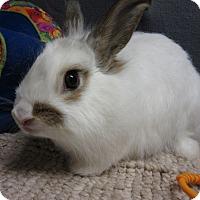 Adopt A Pet :: Puffin - Newport, DE