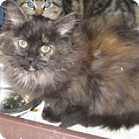 Adopt A Pet :: Bella - McHenry, IL