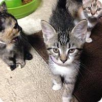Adopt A Pet :: Moose Tracks - Putnam, CT