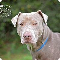Adopt A Pet :: Buster - Fort Valley, GA