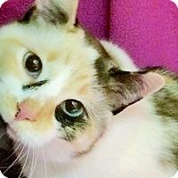 Adopt A Pet :: Fiona - Colorado Springs, CO