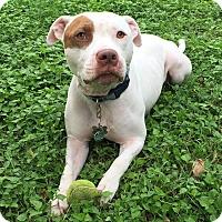 Adopt A Pet :: Junior - Austin, TX