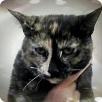 Adopt A Pet :: Ana - Trevose, PA