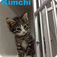 Adopt A Pet :: Kimchi - Chaska, MN