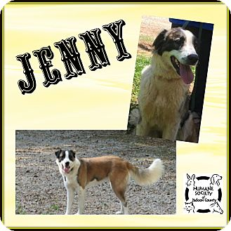 Anatolian Shepherd/Great Pyrenees Mix Dog for adoption in Jefferson, Georgia - Jenny