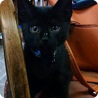Adopt A Pet :: Augusto - Hazlet, NJ