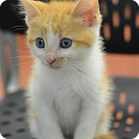 Adopt A Pet :: Bud161814 - Atlanta, GA