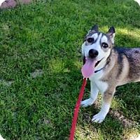Adopt A Pet :: Dakota - Lakeville, MN