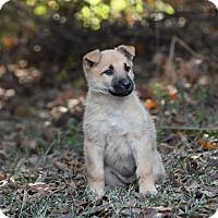 Adopt A Pet :: Kahlua - Groton, MA