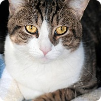 Adopt A Pet :: Waldo - Manahawkin, NJ