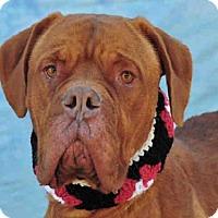 Adopt A Pet :: NALA - Louisville, KY