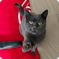 Adopt A Pet :: Grace - Manchester, CT