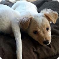 Adopt A Pet :: Teddy - Yelm, WA