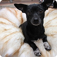 Adopt A Pet :: Meredith - Fort Atkinson, WI