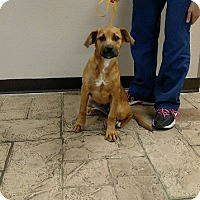 Adopt A Pet :: Jelly - Oviedo, FL