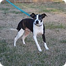 Adopt A Pet :: Presley