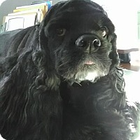 Adopt A Pet :: Holly - Kalamazoo, MI