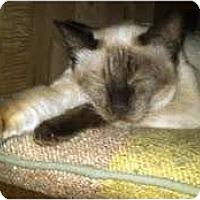 Adopt A Pet :: Frankie - Alexandria, VA