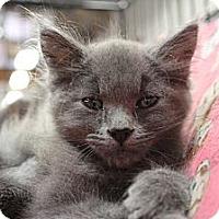 Adopt A Pet :: Katia - Santa Monica, CA