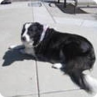 Adopt A Pet :: Pepper - Phelan, CA