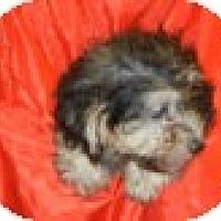 Adopt A Pet :: Trinidad - Antioch, IL