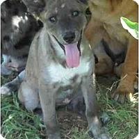 Adopt A Pet :: June- ND - Glastonbury, CT