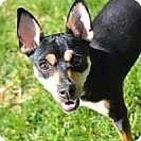Adopt A Pet :: Roscoe - Nashville, TN