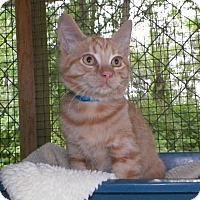 Adopt A Pet :: OJ - Dover, OH