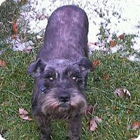 Adopt A Pet :: Meli-News! - Laurel, MD