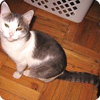 Adopt A Pet :: Ophelia - Colmar, PA