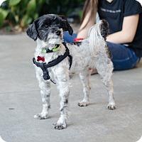 Adopt A Pet :: Belvedere - Encino, CA