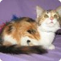 Adopt A Pet :: Lezzette - Powell, OH