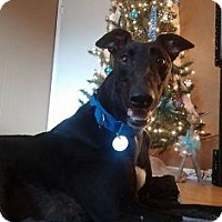 Adopt A Pet :: Spry Drabek - Knoxville, TN