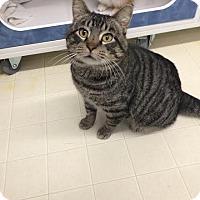 Adopt A Pet :: Dennis - Beatrice, NE