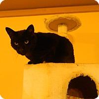 Adopt A Pet :: Barney - Jupiter, FL