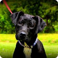 Adopt A Pet :: Starlet~ meet me! - Glastonbury, CT