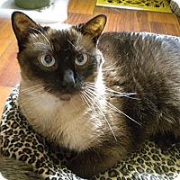 Adopt A Pet :: Hershey - Bridgeton, MO