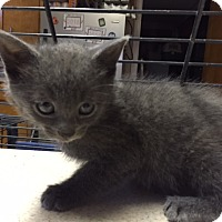 Adopt A Pet :: Sassee - Forest Hills, NY